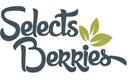 Selects Berries de los Reyes